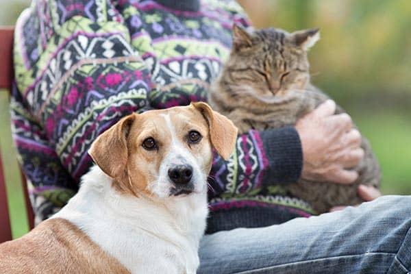 Boyd Pet Project